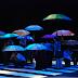 """Caleidos remonta espetáculo """"Mapas Urbanos"""" como parte da mostra que comemora duas décadas da Cia. de Dança"""