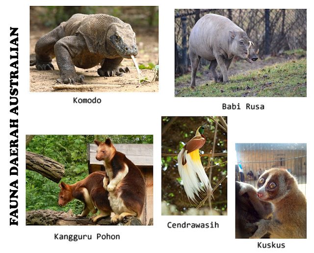 Fauna Australian