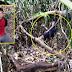 Gadis Diculik Abang Ipar Ditemui Dalam Hutan