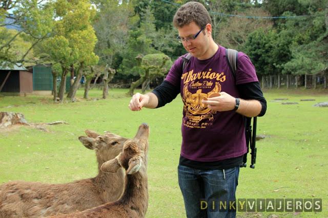 Ciervos de Nara comiendo galletas