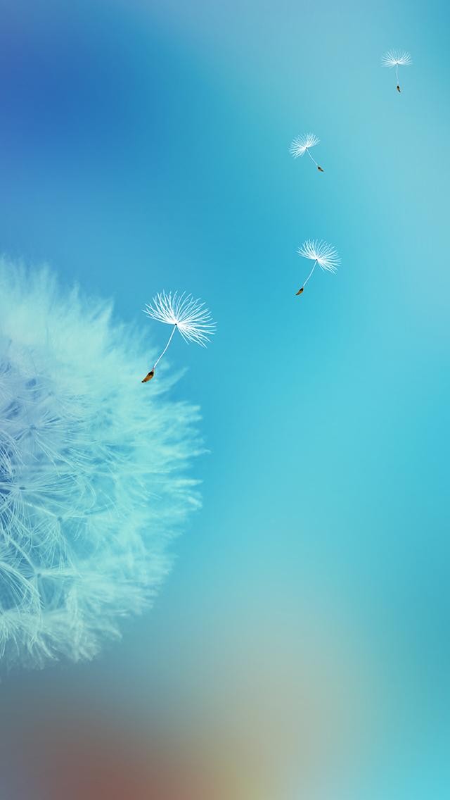 Free Wallpaper Phone: Dandelion Flower Wallpapers iPhone SE