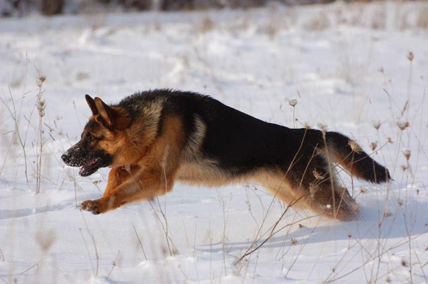 خلفيات كلاب جميلة