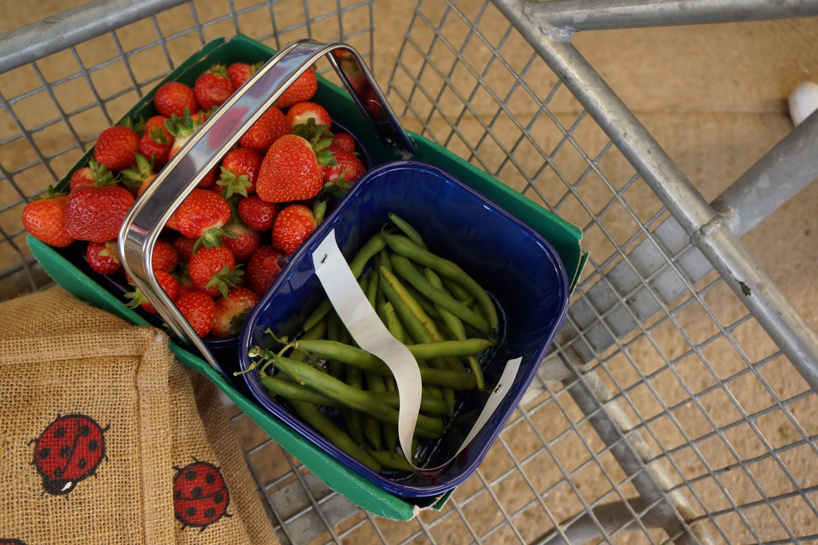 pick your own farm strawberries and french beans in a basket