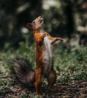 Zombie, Eichhörnchen, komisch, Humor