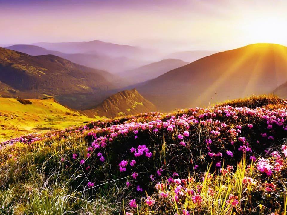 Montes floridos