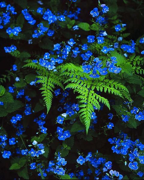 LA FOTO DEL DIA: intense blue with green 1
