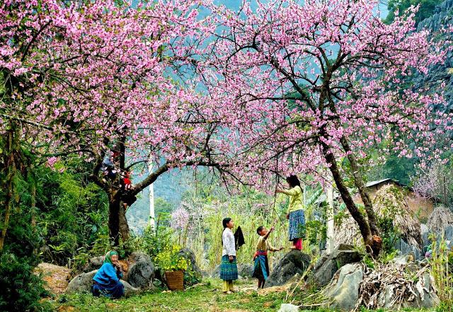 Tập hợp những cảnh sắc bốn mùa chỉ có ở Việt Nam- một đất nước của những con người bình dị, giản đơn nhưng luôn tự hào vì nét đẹp của mình