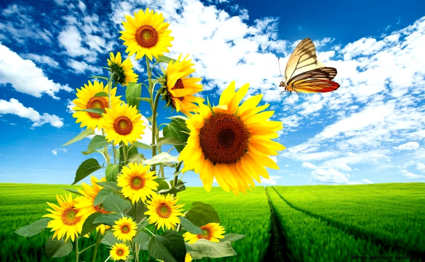Spring Flowers And Butterflies Wallpaper Amazing Wallpapers