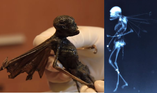 Is This Specimen The Most Definite Proof of the Existence of Fairies?