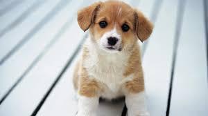 Tips dan Cara Memandikan Anjing