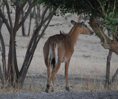 BLACK BUCK PARK 2 MARCH. EARLY MORNING VISIT