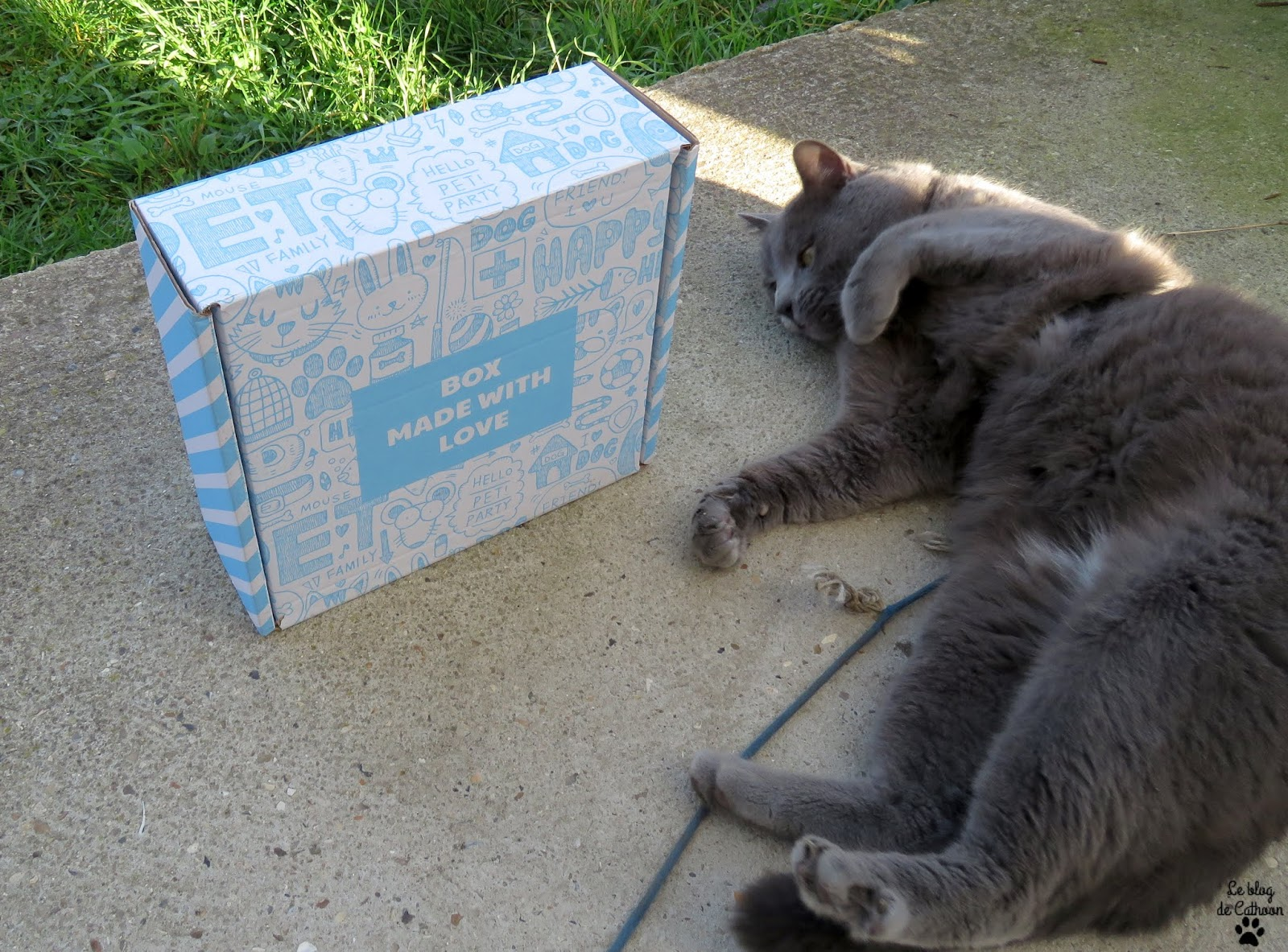 Miaoubox, la box des chats