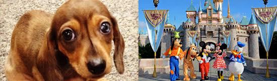 15 coisas estranhas proibidas na Disneylândia - Pets