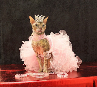 Coco, the Couture Cat, in her Pink Confection Pageant Dress