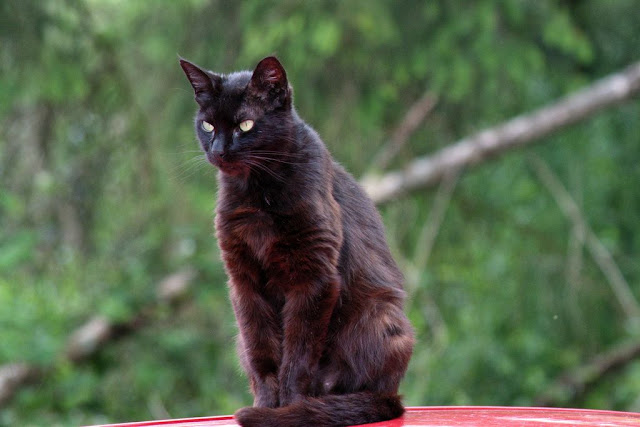 black cat nano kay kay on car top with red reflected light