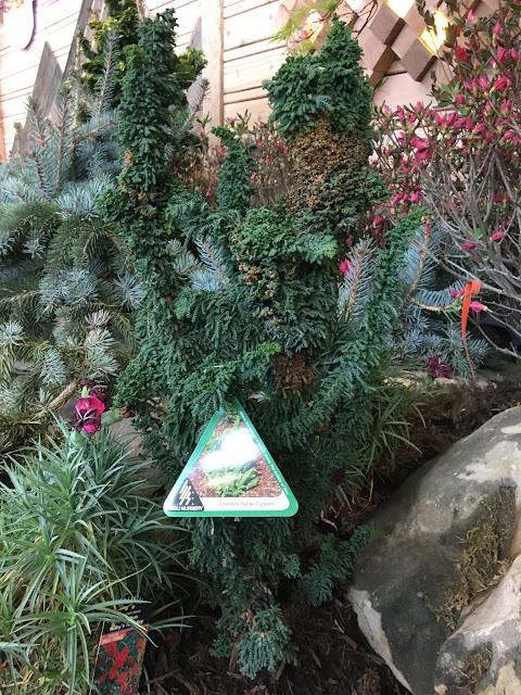 Chirimen Hinoki Cypress