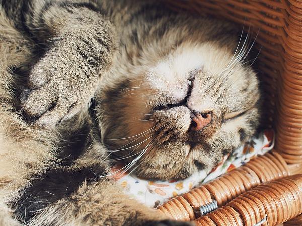 寝顔のアップ