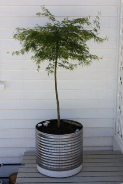 Drum mesin cuci cocok sekali jadi pot tanaman, karena ada lubang-lubang  kecil di bagian bawah drum yang bisa mengalirkan air dari tanah.