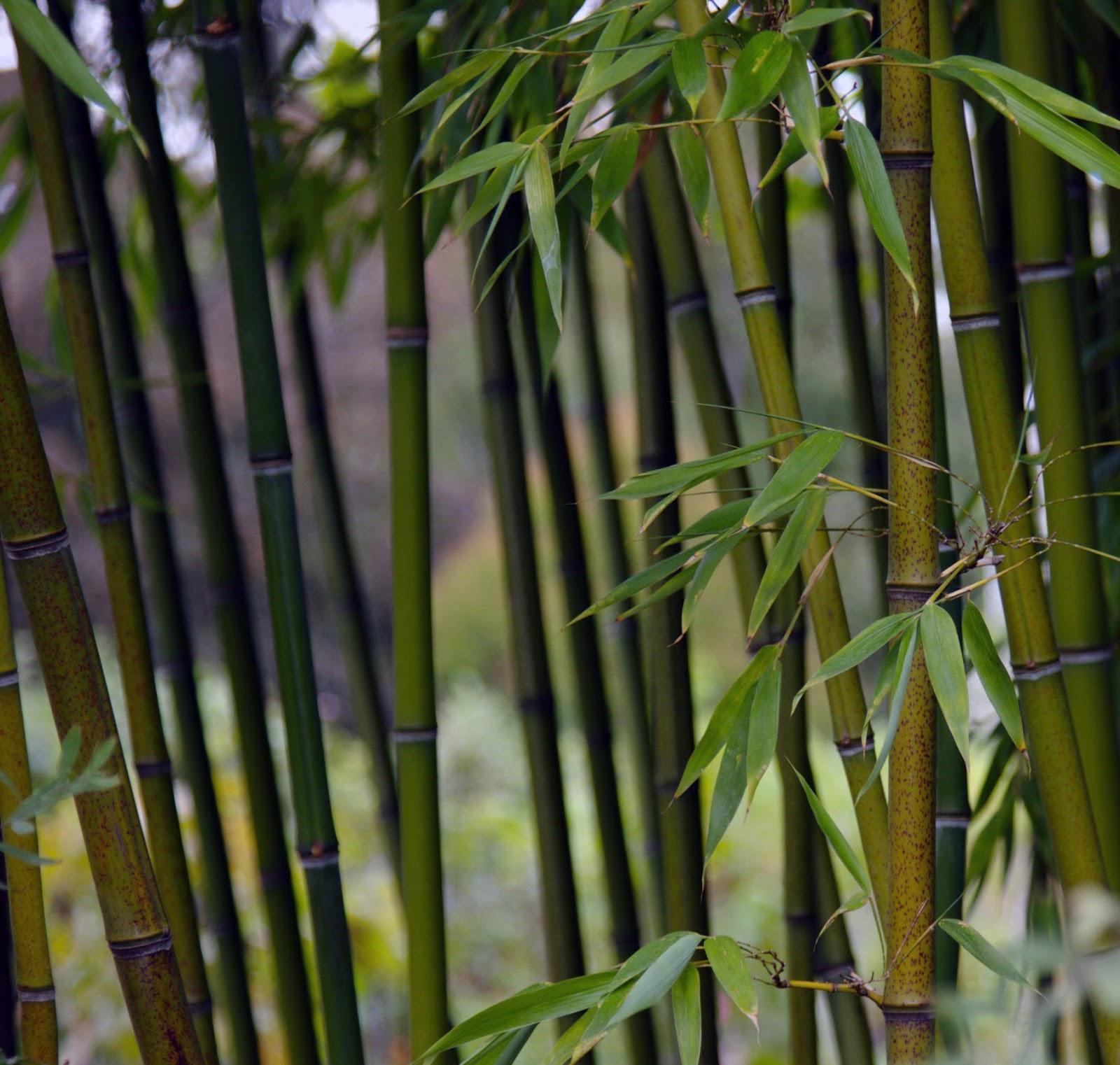 Bamboo Craft Wrldcrafts