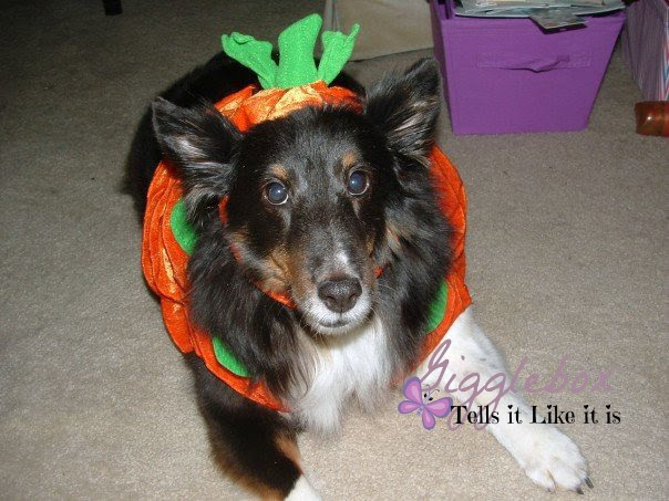 some ideas on how to dress up your doggie friends for Halloween, Halloween costumes, Halloween, Halloween custome ideas for dogs,