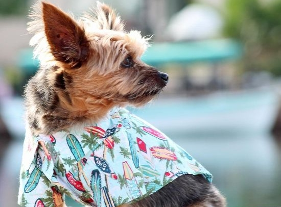 Hawaiian Shirts for Dogs