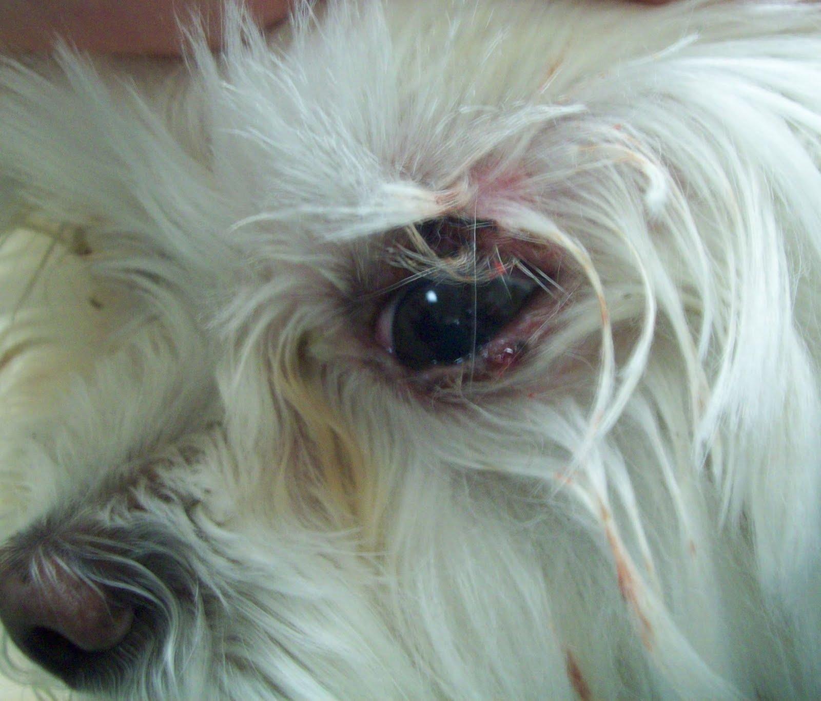 prostata cane pòiccolo di 8 anni 3