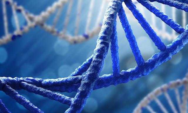 Apa Itu DNA