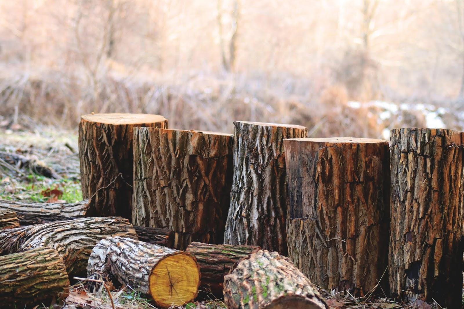 Hiring Tree Services Company