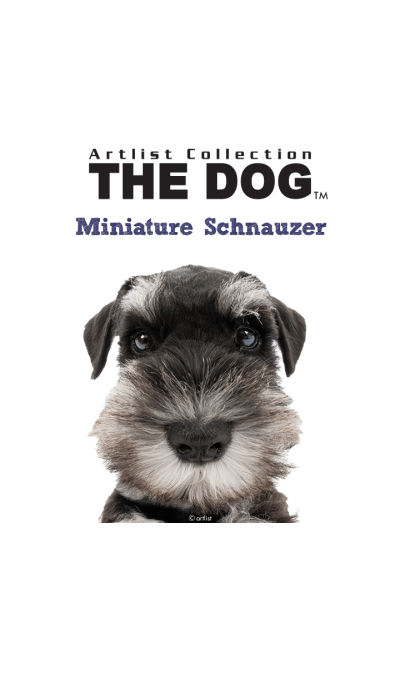 THE DOG Miniature Schnauzer
