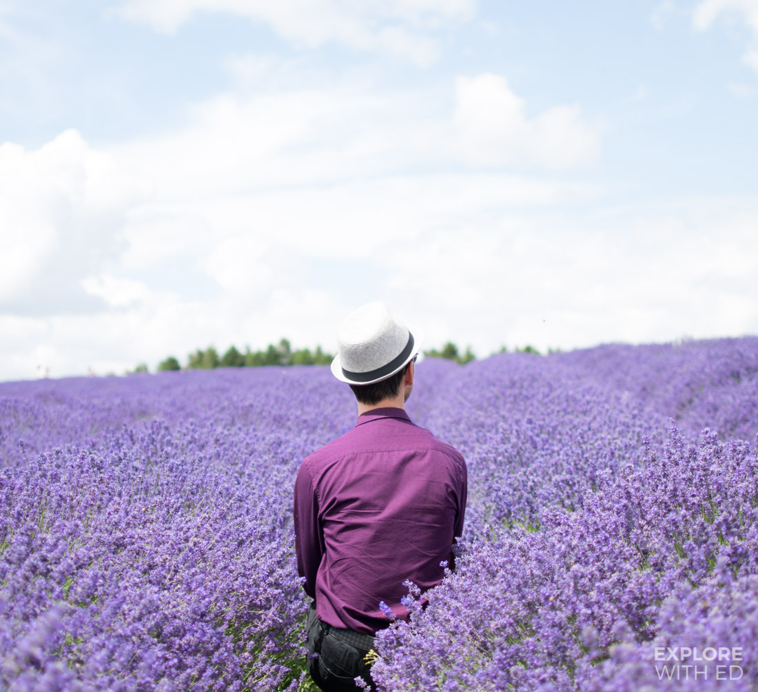Explore With Ed in Cotswold Lavender Farm