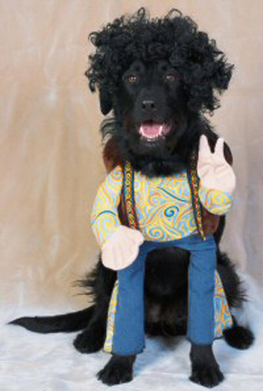 Dogs Funny Looks In Their Bizarre Costumes