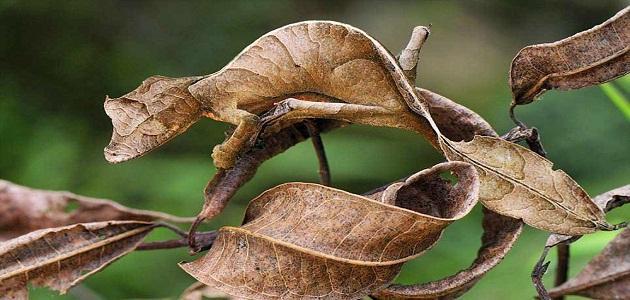 التكيف لدى النباتات