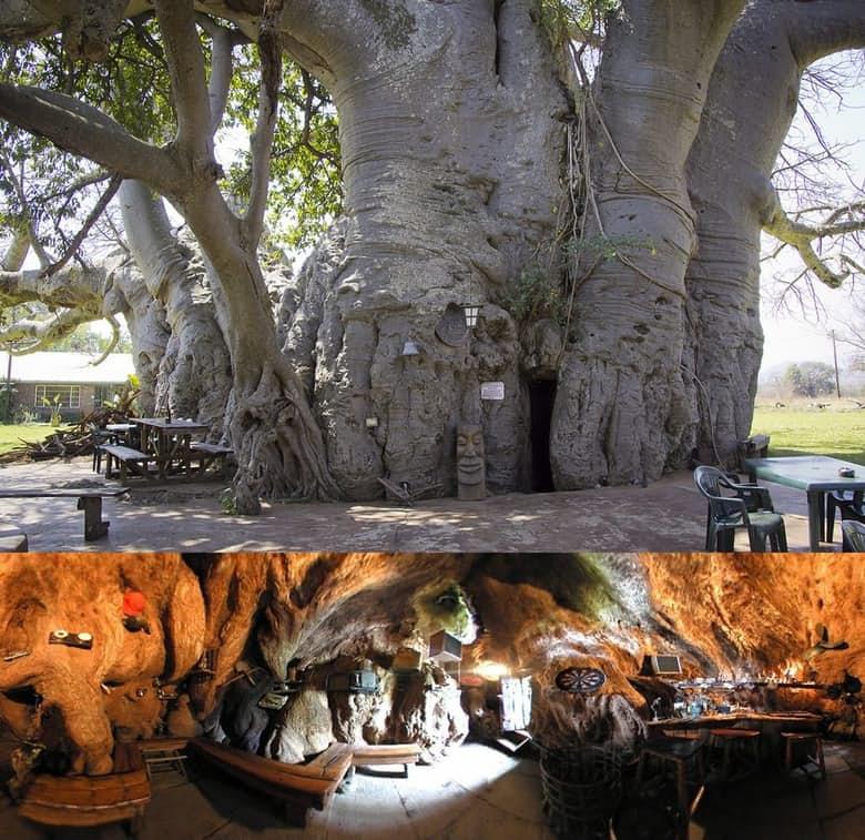 Sunland Bar (Ağaç Bar) Limpopo Güney Afrika