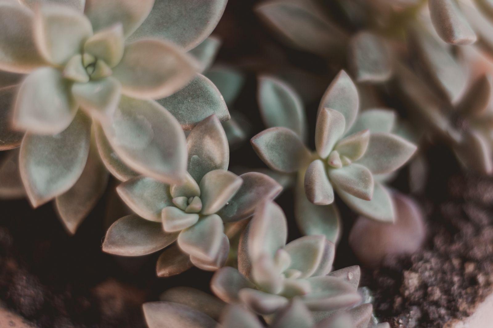 Adoradores de plantas | Houseplant jungle