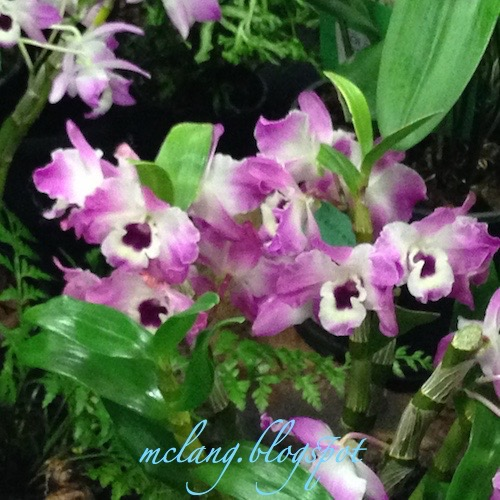 Orchids for Long Lasting