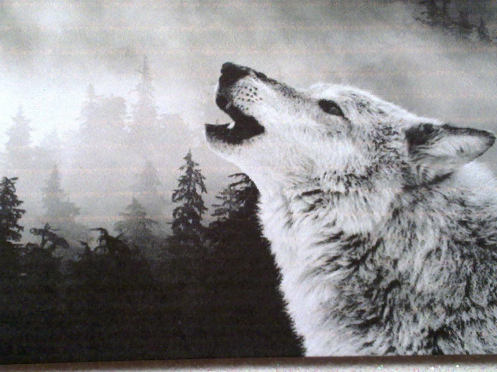 White wolf growling