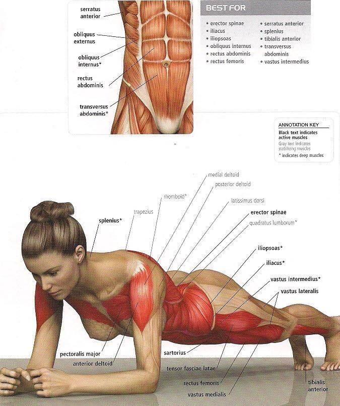 Anatomía Humana UAL