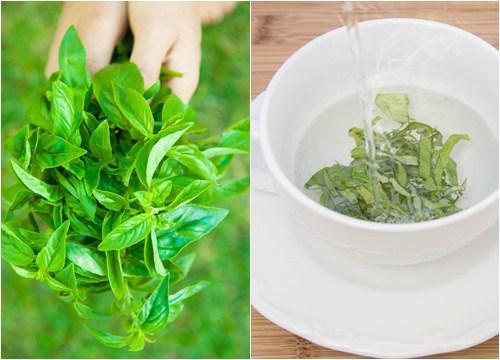 manfaat daun kemangi dan cara mengolahnya