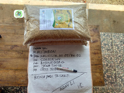 Benih pesanan M. ALI IMRON Bojonegoro, Jatim.    (Sebelum Packing)