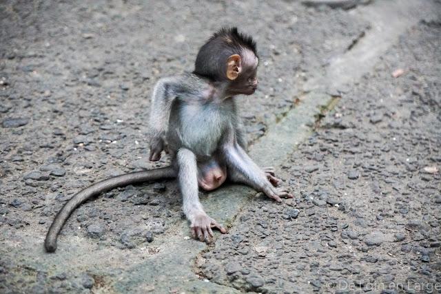 Monkey Forest - Ubud - Bali