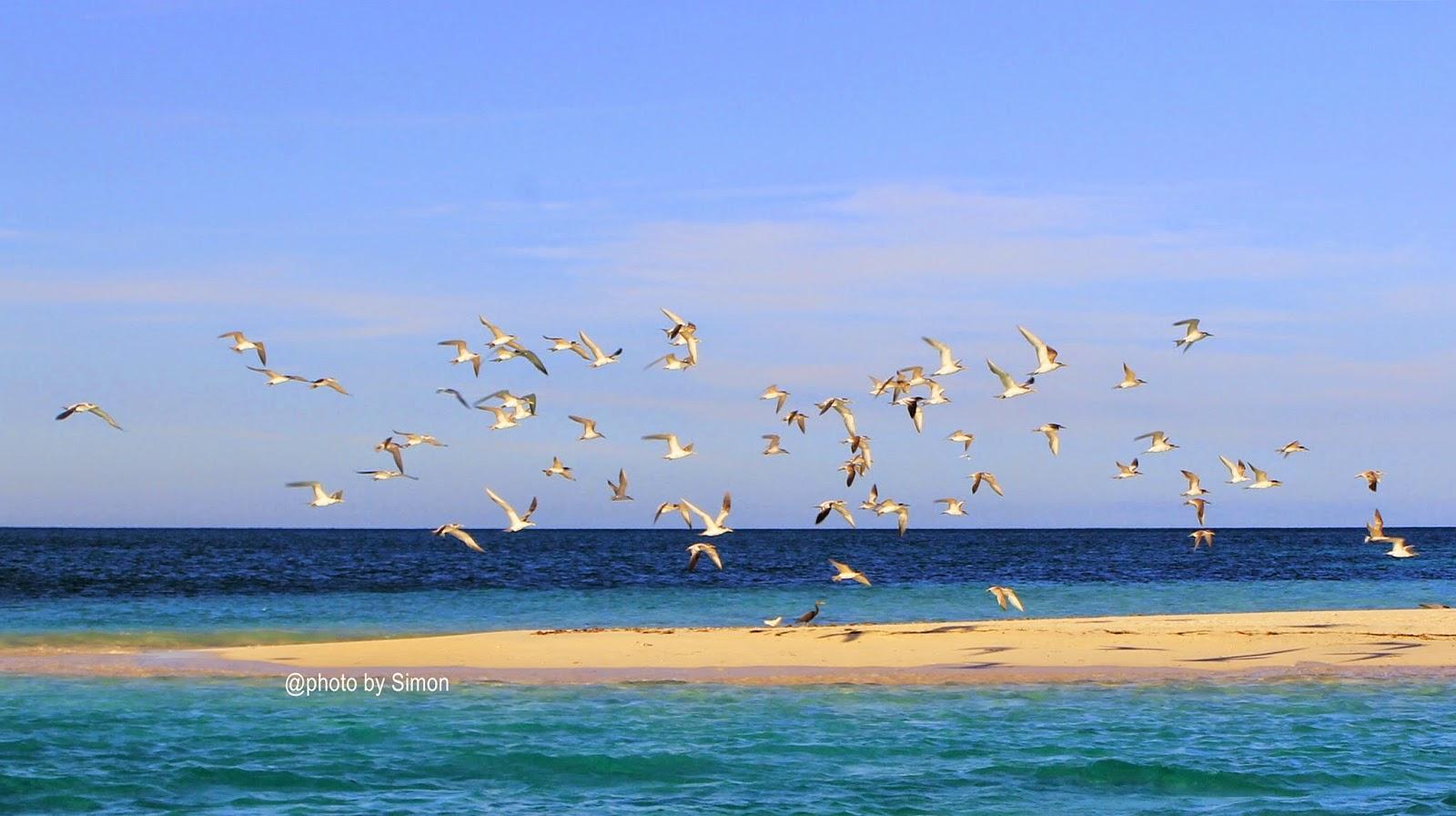 Pulau Meko atau Pasir Timbul Meko | Foto: Simon / NagiTana