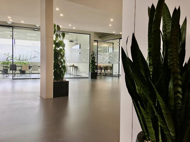 inkleden interieur en terras met planten die donker kunnen staan en weinig licht nodig hebben en weinig onderhoud vragen en niet veel water moeten hebben en in de zon kunnen staan