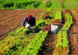 Agricoltura italiana in ginocchio, la siccità provoca danni milionari