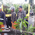 Penanggulangan Pohon Tumbang di Depan Rumah Bersalin Bunda Kelurahan Way Mengaku