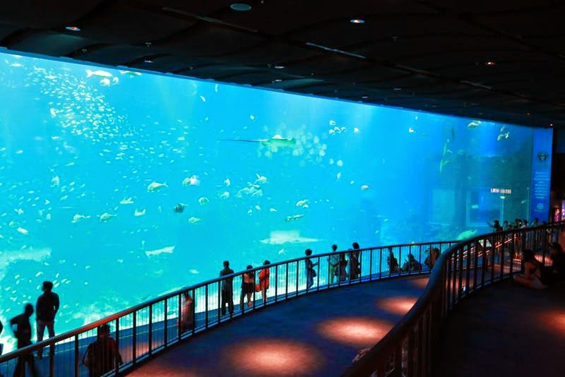 "Singapore, The island of Sentosa, is the largest ocean aquarium modernity with a name SEA Aquarium. Included in this giant aquarium park complex ""Marine life""."