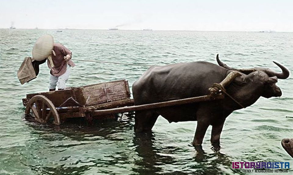 Carabao-drawn carriage by the sea (c1900s)