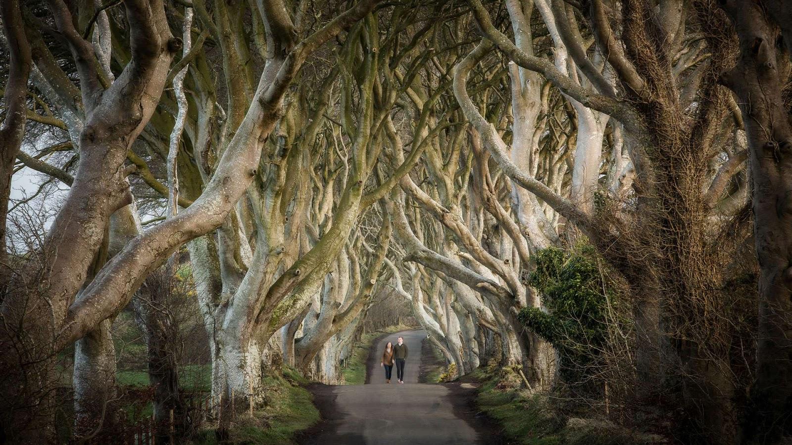 Dark Hedges | Northern Ireland