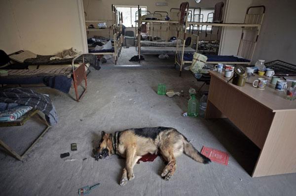 "Результат пошуку зображень за запитом ""прикордонники 2014 вбитий собака"""