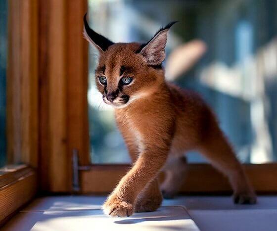 Esos Gatos Locos Los 10 Gatos Más Bonitos De Internet