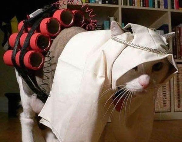 Terrorist cat picture